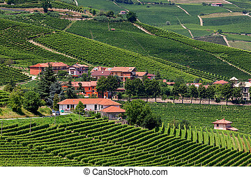 Small village among green vineyards.