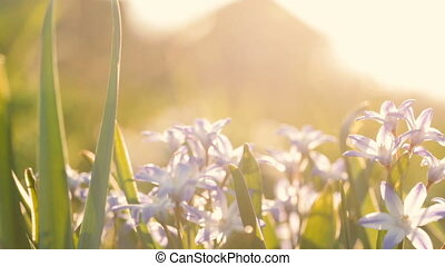 Small violet flowers on the background of sunlight.