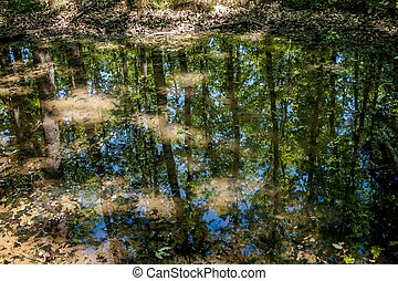 Small water puddle in the forest