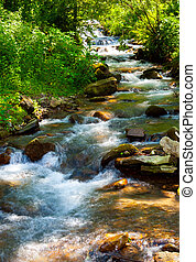 small water stream on sunny day. lovely summer nature...