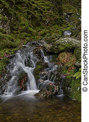 Small waterfall in mossy woodland.