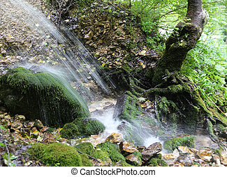 small waterfall in the forest