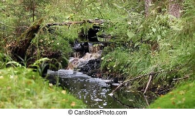 small waterfall on a creek in forest, stream pure cold water...