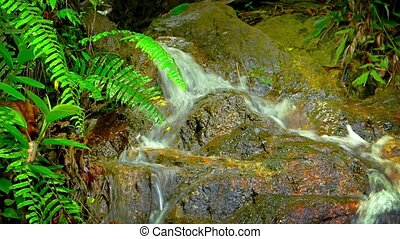 Small waterfall on a creek in the rainforest
