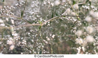 small white blossoms in the wind