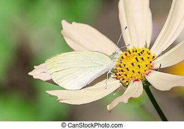 Small white butterfly on beige flower