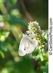 Small white butterfly on green leaf