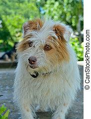 Small white dog 3