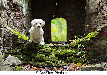 Small white dog sitting old building