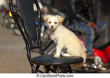 Small White Dog Sitting on a Chair