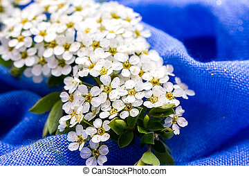 Small white flowers on blue background