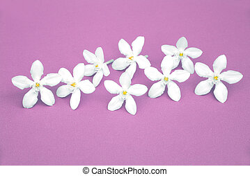 small white flowers on purple background (summer concept)