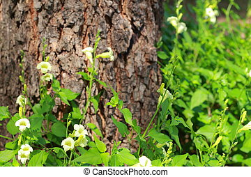Small white flowers.