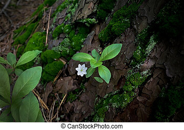 small white forest flower close-up on a background of leaves