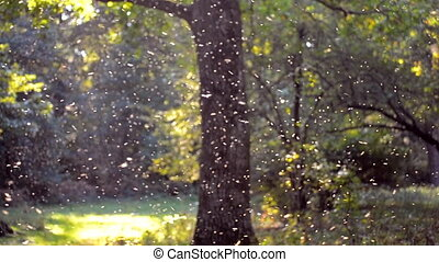 Small white insects midges close-up in the forest - Small...