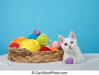 Small white kitten with heterochromia with basket of yarn
