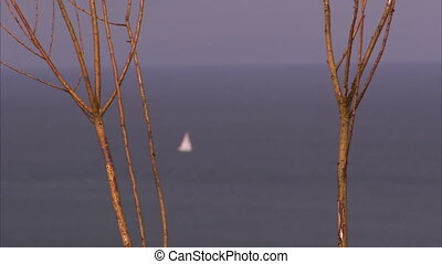 Small white sailboat - A foreground shot of a thin tree...