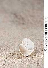 Small white seashell on sand