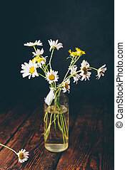 Small wild chamomile flowers