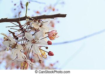 Small Wild Himalayan Cherry panicle