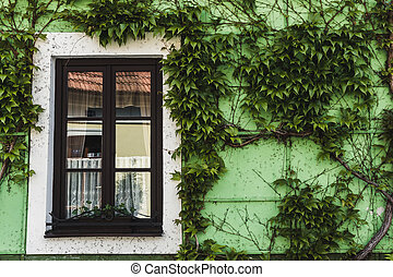 small Window on green wall with ivy