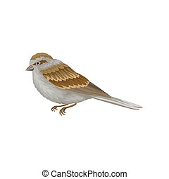 Small winter bird with gray-brown plumage, side view. Wildlife and fauna theme. Flat vector design