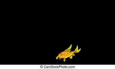 Small Yellow Aquarium Fish - Small yellow fish floats in an...