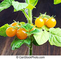 Small yellow cherry tomatoes