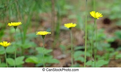 Small yellow flowers in forest. Nature composition.