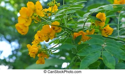 Small yellow flowers on a bush.