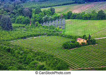 Small yellow house among vineyards, Tuscany, Italy