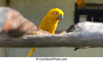 small yellow parrot sits on a branch