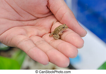 Small young frog in hands of a person