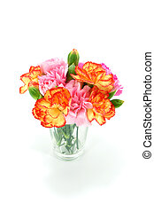 Smaller carnations on a white background  for mother's day.