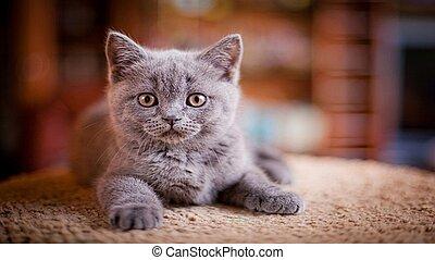 smaller., dogs., братья, cats, наш