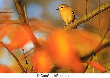 smallest bird of europe in the autumn forest