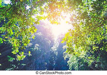 smaragd, höhle, in, der, meer, trang, thailand