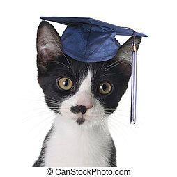 Smart cat  - Smart cat