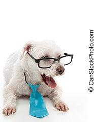 Smart dog surprised