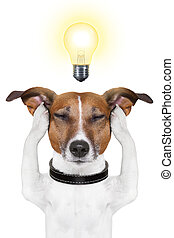smart intelligent dog - smart dog thinking with a light bulb...