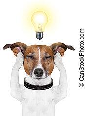 smart intelligent dog - smart dog thinking with a light bulb...