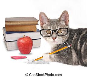 smart, kat, schrijvende , met, boekjes , op wit