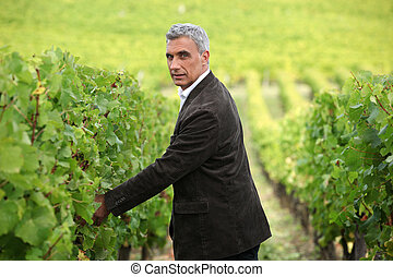 Smart man in a vineyard