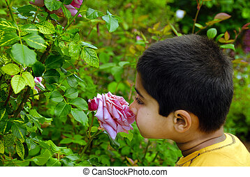 Smelling summer - An Indian kid smelling rose - concept of ...
