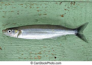 Smelt - Fresh caught smelt fish on green table