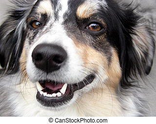 Smile for the Camera - Dog striking happy face for the...
