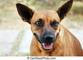 smile - Dog with a smile on a muzzle