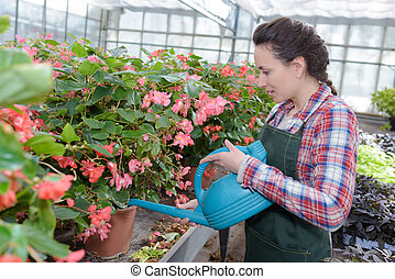 smiling gardener watering plants nursery