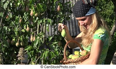 Smiling gardener woman working with pleasure in garden. Pear fruits harvesting. 4K