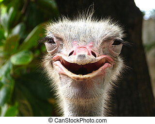 Smiling Ostrich - A shot of a jolly ostrich at the zoo.